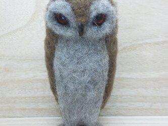 フクロウ (スピックスコノハズク)の画像