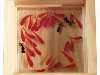 樹脂金魚 アクリル 金魚 アート プレミアム 「極」純日本製  プレゼント 結婚祝い 還暦祝い 誕生日 男性 女性 ヒノキの画像