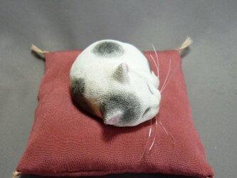 アンモニャイト 手乗り豆大福猫さん 絹の座布団付の画像