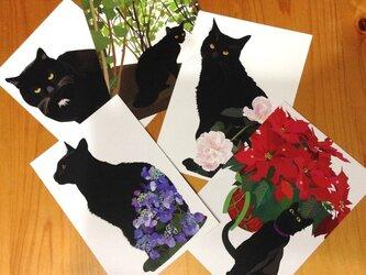 黒猫ポストカード5枚セットの画像