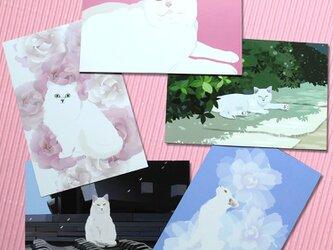 白猫ポストカード5枚セットの画像