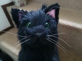 黒猫のぬいぐるみの画像