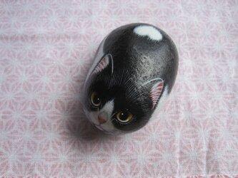 石猫  「ハチワレ」の画像
