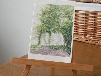 緑と朝の光 / postcard 2枚組の画像