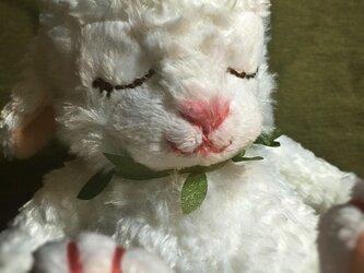 眠りウサギの画像