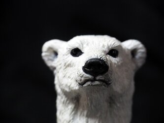Polar Bear【シロクマ】の画像