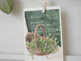 Thyme / postcard 2枚組の画像