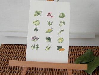 野菜 / postcard 2枚組の画像