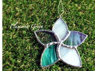 プルメリア*greenの画像