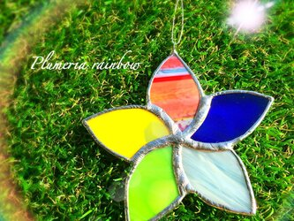 プルメリア*rainbowの画像