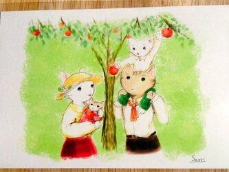 [2枚組]『りんごの木かげで』ポストカードの画像