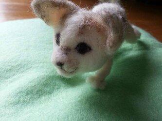 赤ちゃん猫ヨチヨチの画像