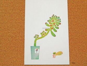ポストカード 001「多肉植物 乙女心」(プリント3点セット) の画像