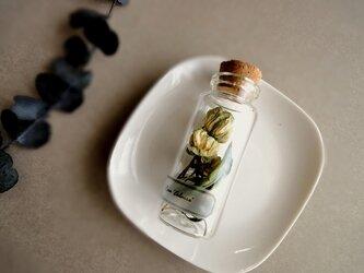 植物標本 Botanical Collection■No.R-2 バラ エ・クレールの画像