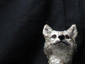 Timber Wolf【シンリンオオカミ】の画像