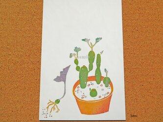 ポストカード 002「多肉植物 七宝樹錦」(プリント3点セット)の画像