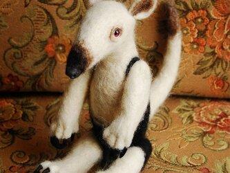 ミナミコアリクイの画像