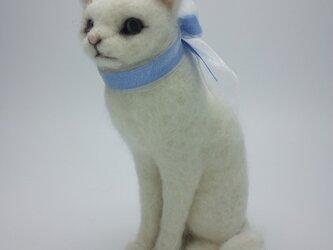 おすまし (白猫)の画像
