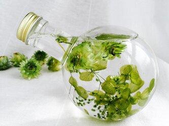 清々しい新緑のハーバリウムランプの画像