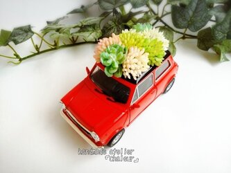 ジメジメ梅雨をぶっ飛ばせ!ミニクーパレッドミニカーフェイク多肉植物!の画像
