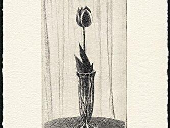 チューリップ・2014 / 銅版画 (作品のみ)の画像
