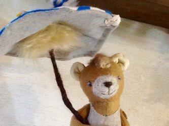 小熊のキノコの傘の画像