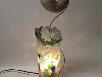 オーム貝のランプの画像