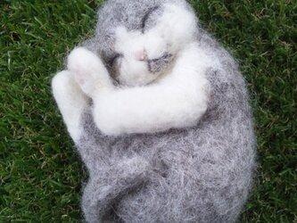 nenneko (グレーホワイト猫)の画像