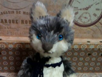 オオカミさん(濃いブルーの目)の画像