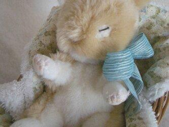 ウサギの赤ちゃんの画像