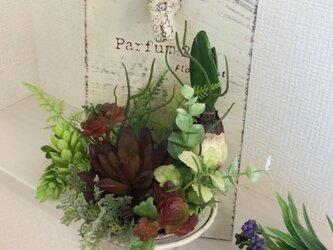 多肉植物/パルファム285(M)の画像