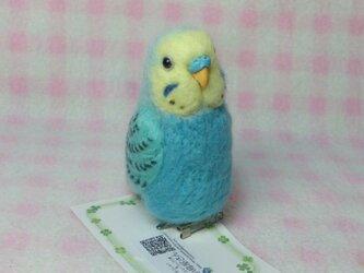 セキセイインコ スカイブルーレインボー mini♪☆選べる2タイプ☆ クリップ付ブローチorマグネット 羊毛フェルトの画像