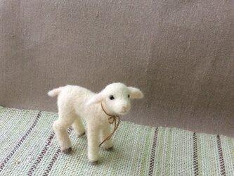 ウールの子ヤギの画像