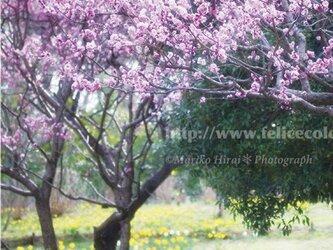 フォトパネル*【春景色】の画像