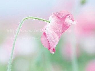 フォトパネル*【星の夜も雨の朝も】の画像
