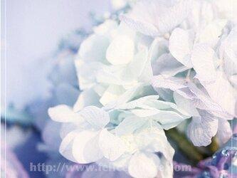 フォトパネル*【June bride】の画像