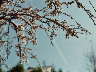 【額付写真】der Frühlingの画像