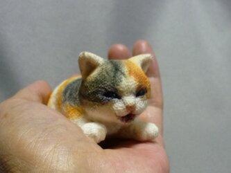 手乗り赤ちゃん猫  絹の座布団付の画像
