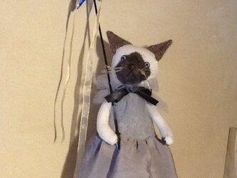 星猫シャム猫の画像