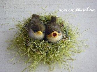 羊毛フェルト・鳥・巣に入ったメジロのヒナ2羽セットの画像