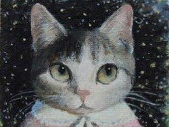 サバ・ピンクの画像