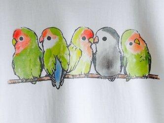 ふんわりコザクラインコの Tシャツの画像