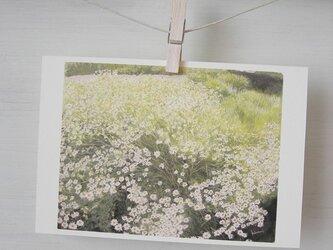 マーガレット / postcard 2枚組の画像