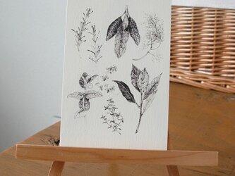 herbs / postcard 2枚組の画像