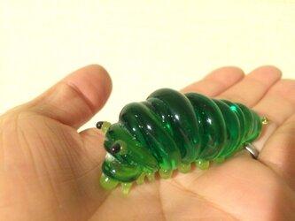 ガラスの幼虫の画像