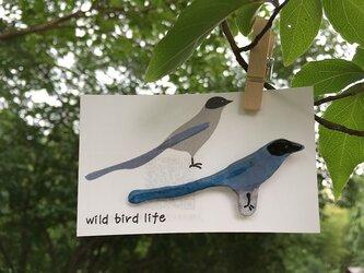 wild bird life ブローチ オナガの画像