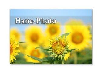 1124) ヒマワリ 3   ポストカード5枚組の画像