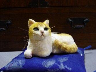 手乗り猫 白茶トラ猫さん 座布団付の画像