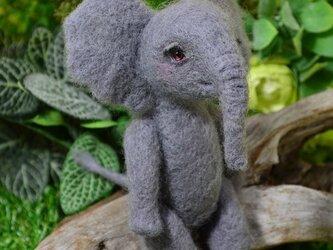 Baby elephant(子象)の画像