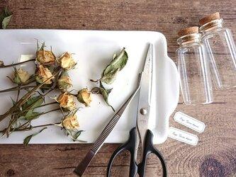 【展示のみ】植物標本 Botanical Collection■No.R-5 バラ スノーダンスの画像